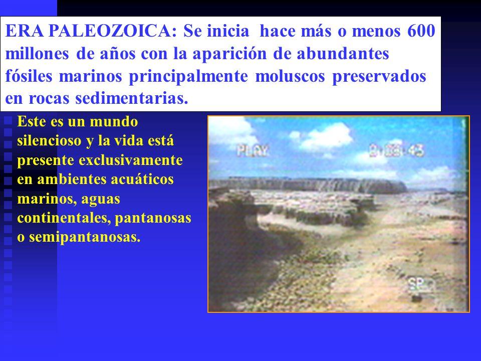 ERA PALEOZOICA: Se inicia hace más o menos 600 millones de años con la aparición de abundantes fósiles marinos principalmente moluscos preservados en rocas sedimentarias.