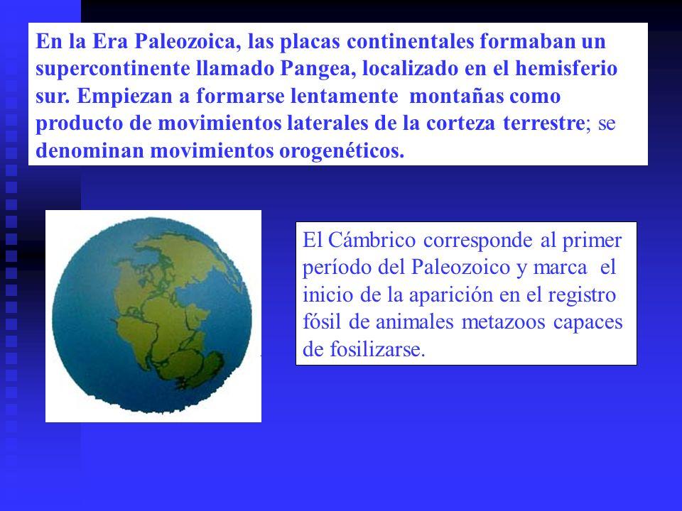 En la Era Paleozoica, las placas continentales formaban un supercontinente llamado Pangea, localizado en el hemisferio sur. Empiezan a formarse lentamente montañas como producto de movimientos laterales de la corteza terrestre; se denominan movimientos orogenéticos.