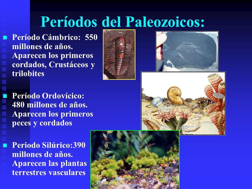 Períodos del Paleozoicos: