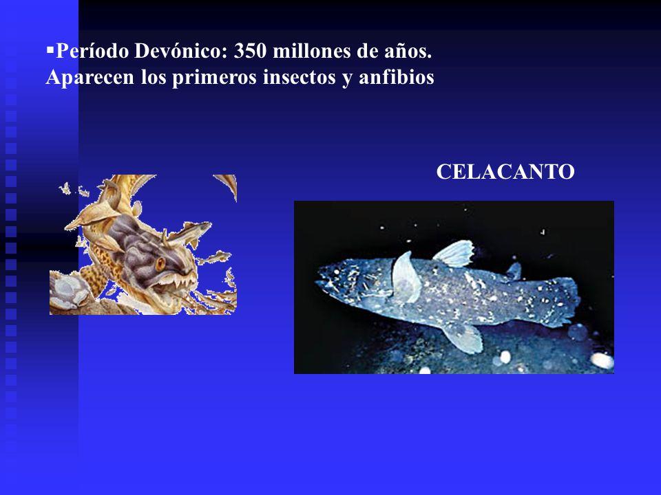 Período Devónico: 350 millones de años