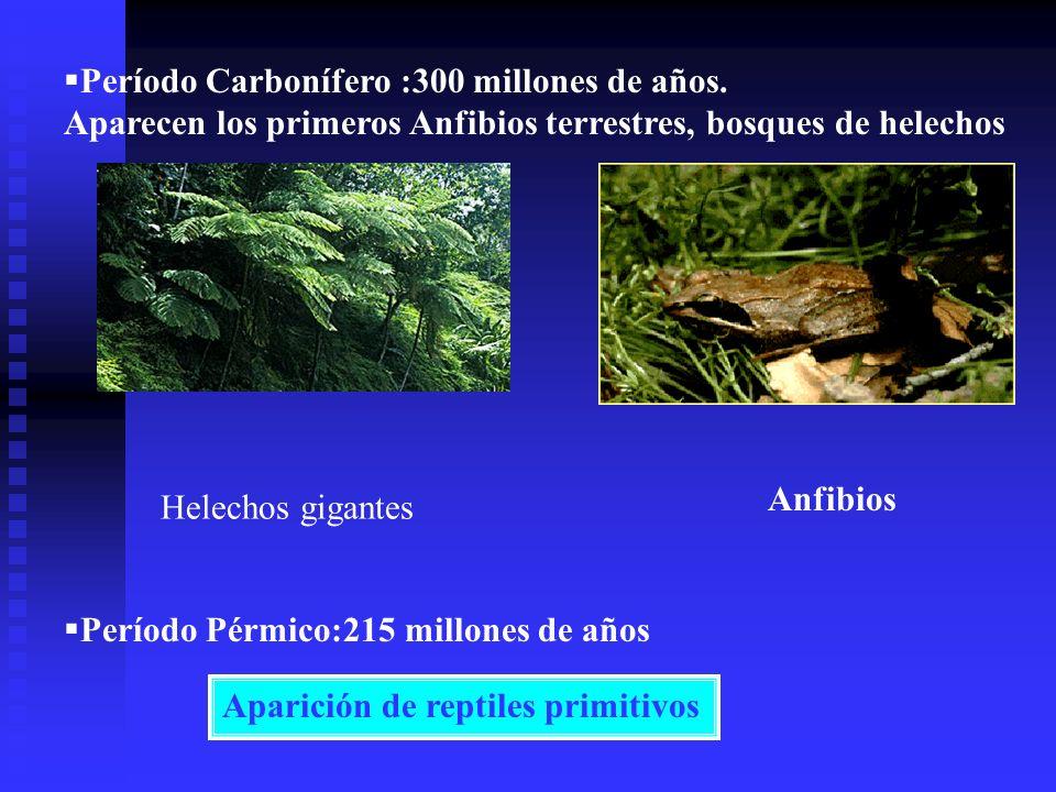 Período Carbonífero :300 millones de años.