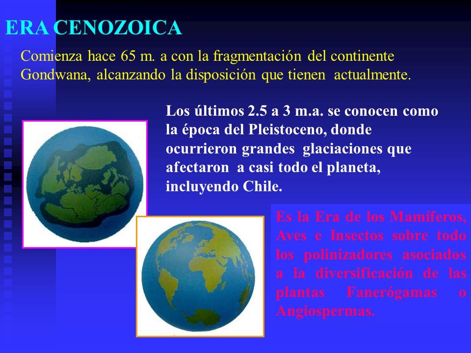 ERA CENOZOICAComienza hace 65 m. a con la fragmentación del continente Gondwana, alcanzando la disposición que tienen actualmente.