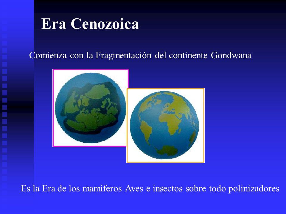 Era Cenozoica Comienza con la Fragmentación del continente Gondwana