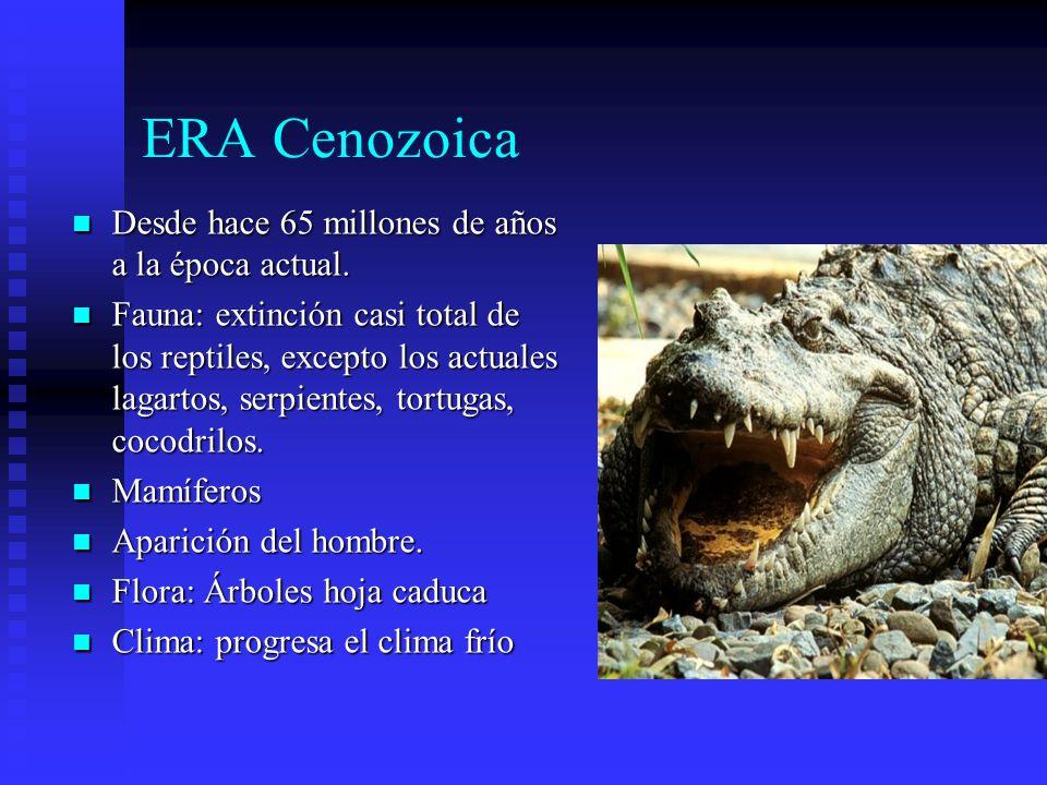 ERA Cenozoica Desde hace 65 millones de años a la época actual.