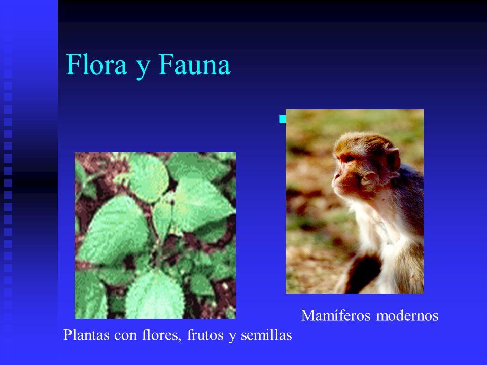 Flora y Fauna Primates Mamíferos modernos
