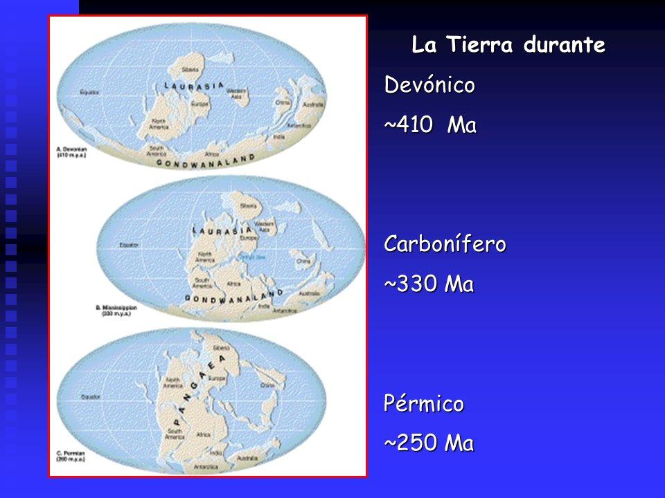 La Tierra durante Devónico ~410 Ma Carbonífero ~330 Ma Pérmico ~250 Ma