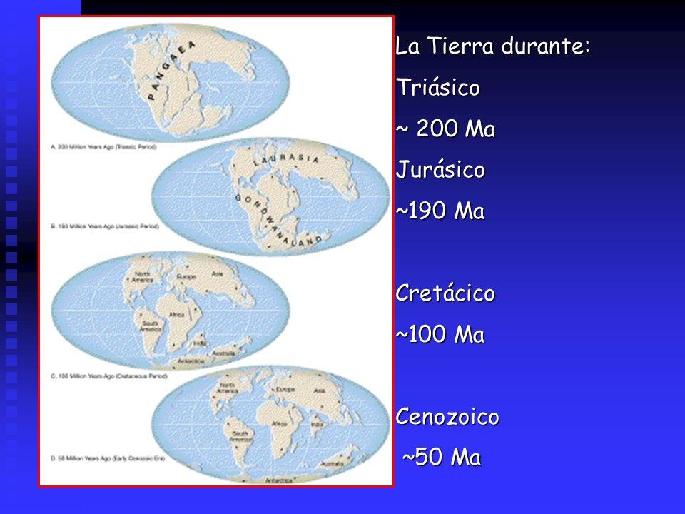 La Tierra durante: Triásico ~ 200 Ma Jurásico ~190 Ma Cretácico ~100 Ma Cenozoico ~50 Ma
