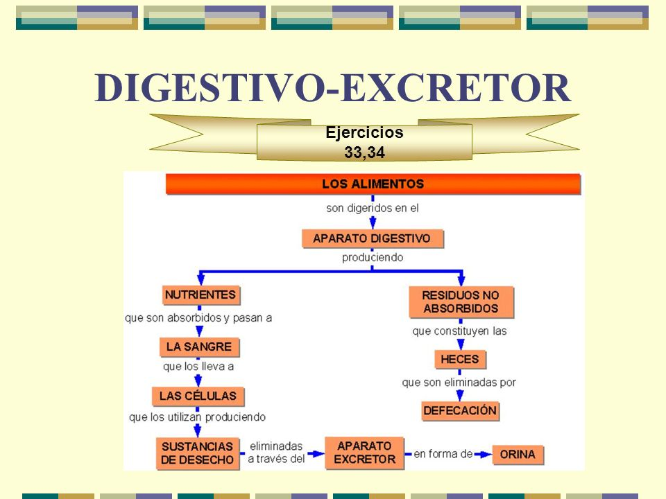 DIGESTIVO-EXCRETOR Ejercicios 33,34