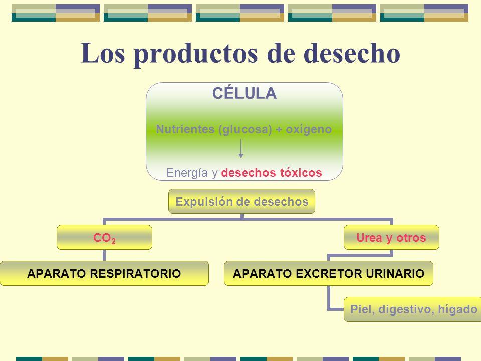 Los productos de desecho