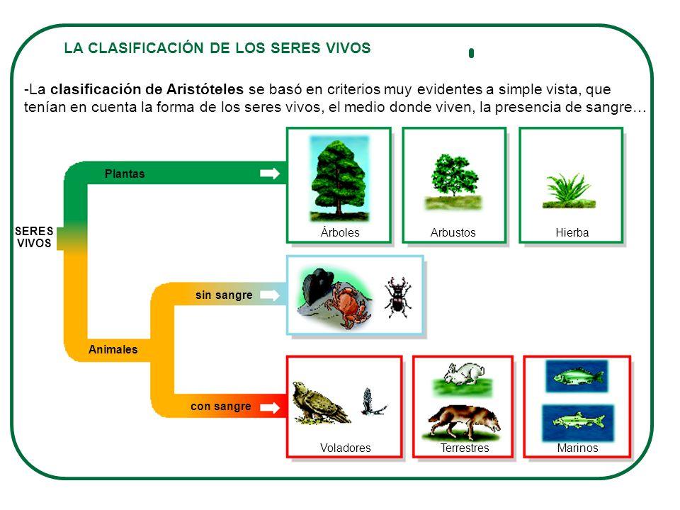 La diversidad de los seres vivos mam feros anfibios la for Medio en el que habitan los arboles