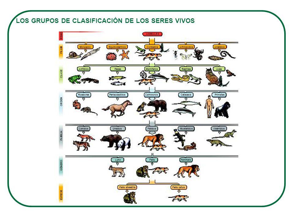 LOS GRUPOS DE CLASIFICACIÓN DE LOS SERES VIVOS
