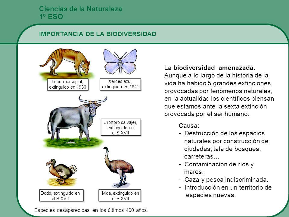 1º ESO Ciencias de la Naturaleza IMPORTANCIA DE LA BIODIVERSIDAD