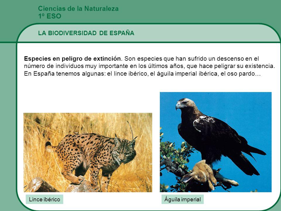 1º ESO Ciencias de la Naturaleza LA BIODIVERSIDAD DE ESPAÑA