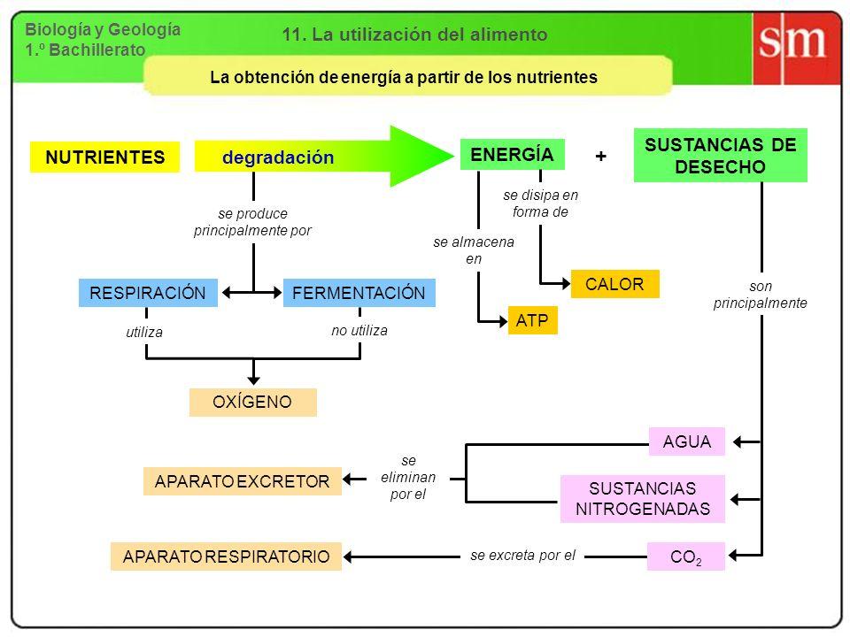 + 11. La utilización del alimento SUSTANCIAS DE DESECHO ENERGÍA