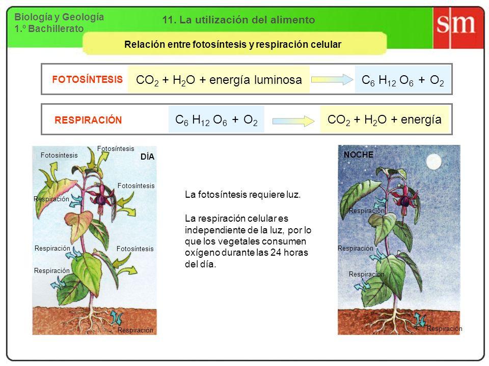 CO2 + H2O + energía luminosa C6 H12 O6 + O2