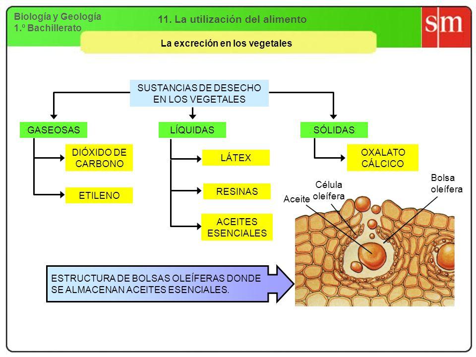 11. La utilización del alimento La excreción en los vegetales