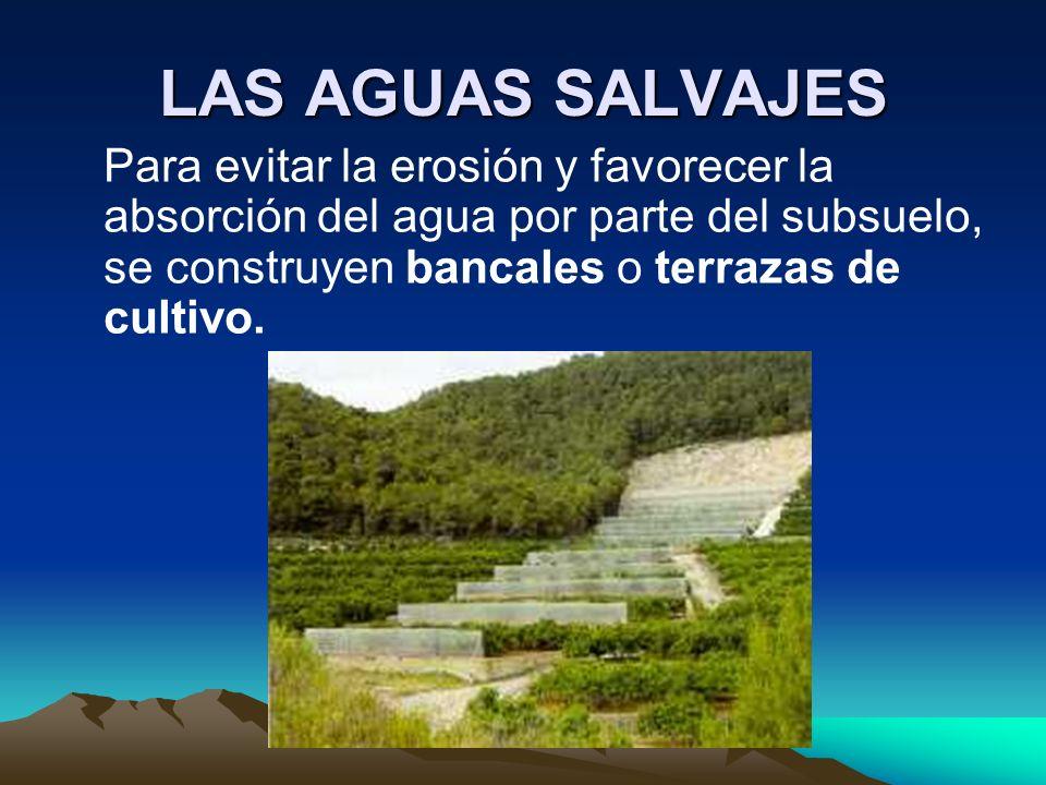 LAS AGUAS SALVAJESPara evitar la erosión y favorecer la absorción del agua por parte del subsuelo, se construyen bancales o terrazas de cultivo.