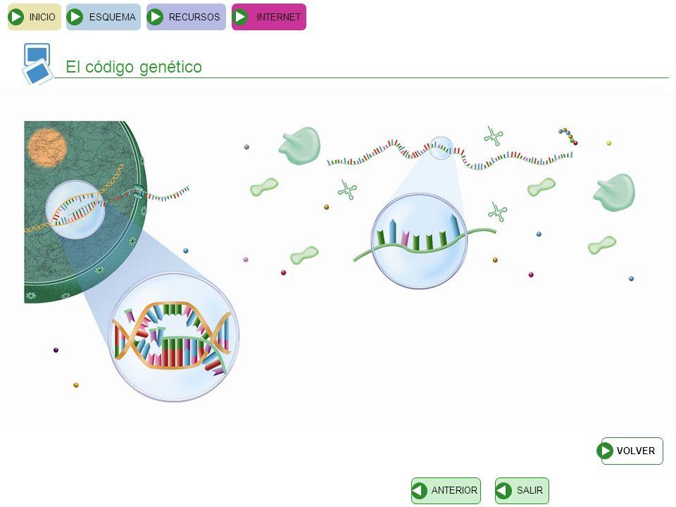 El código genético aminoácido ARNt