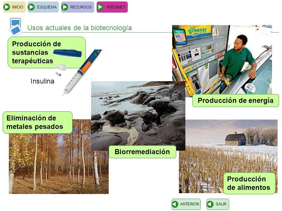 Producción de energía Biorremediación
