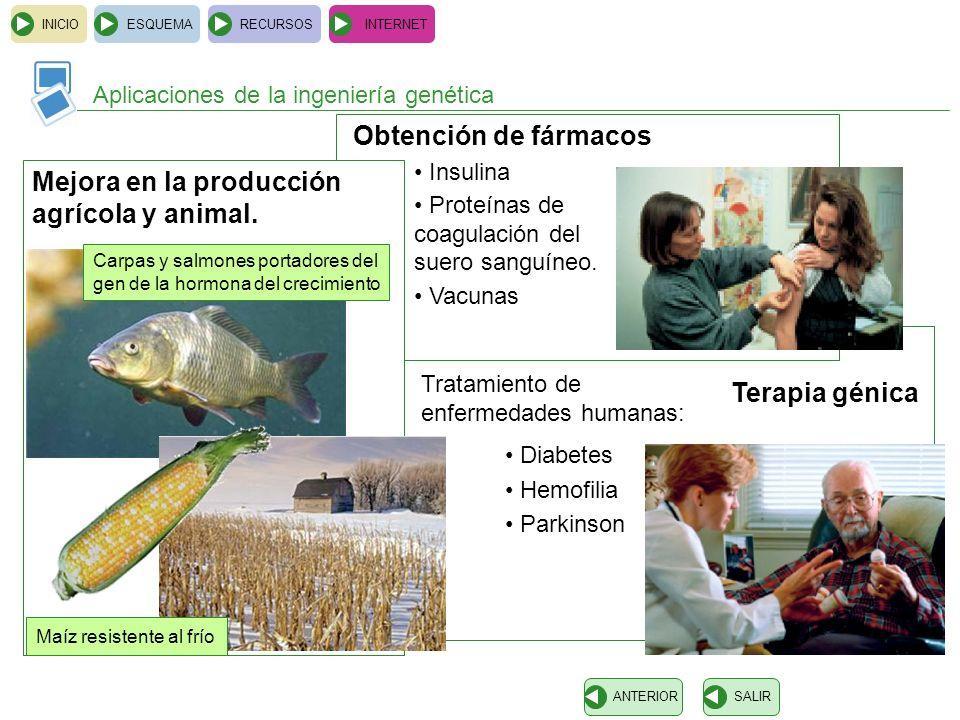 Mejora en la producción agrícola y animal.