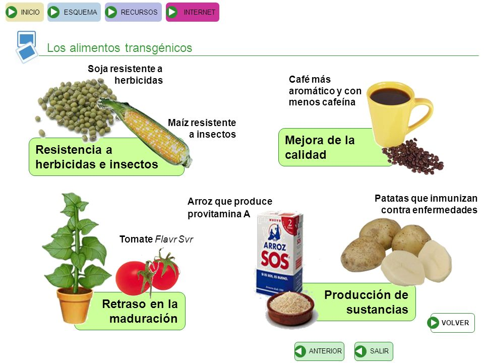 Los alimentos transgénicos