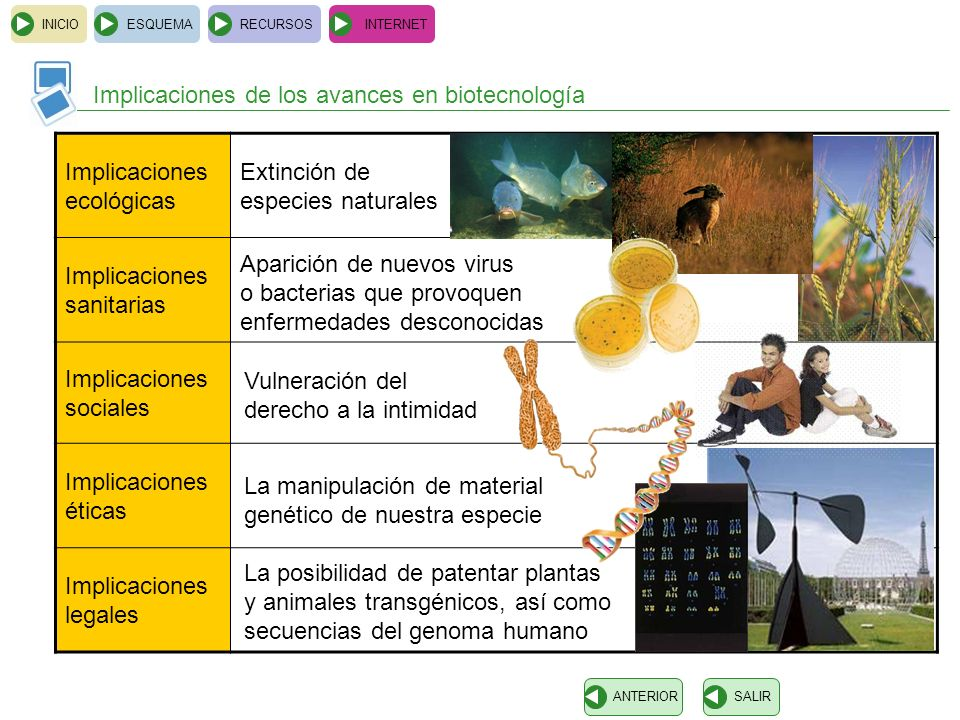 Implicaciones de los avances en biotecnología Implicaciones ecológicas
