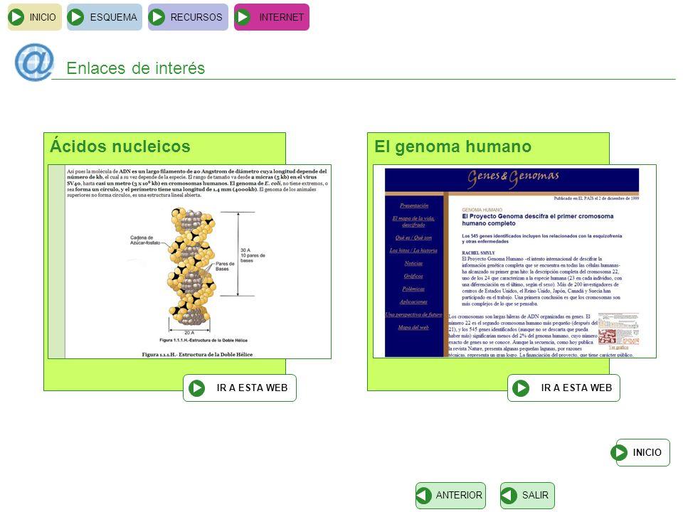 Enlaces de interés Ácidos nucleicos El genoma humano INICIO ESQUEMA