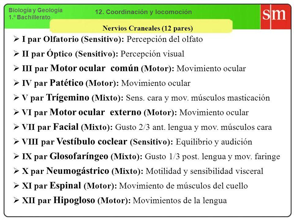 12. Coordinación y locomoción Nervios Craneales (12 pares)
