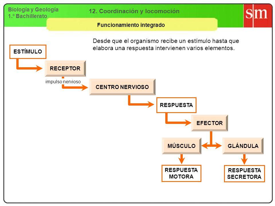 12. Coordinación y locomoción Funcionamiento integrado