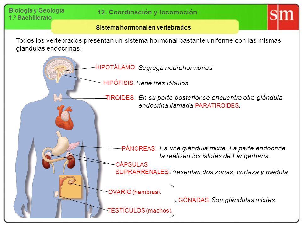 12. Coordinación y locomoción Sistema hormonal en vertebrados