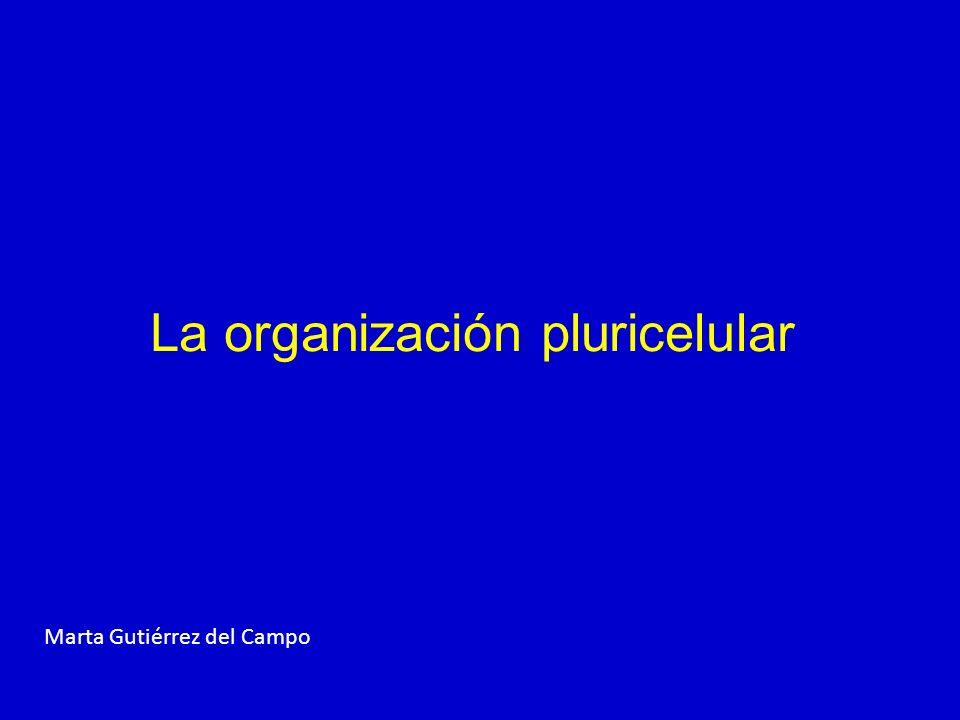 La organización pluricelular