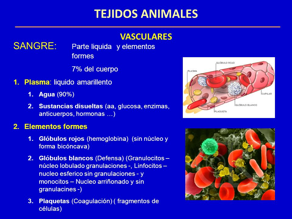 TEJIDOS ANIMALES VASCULARES SANGRE: Parte liquida y elementos formes