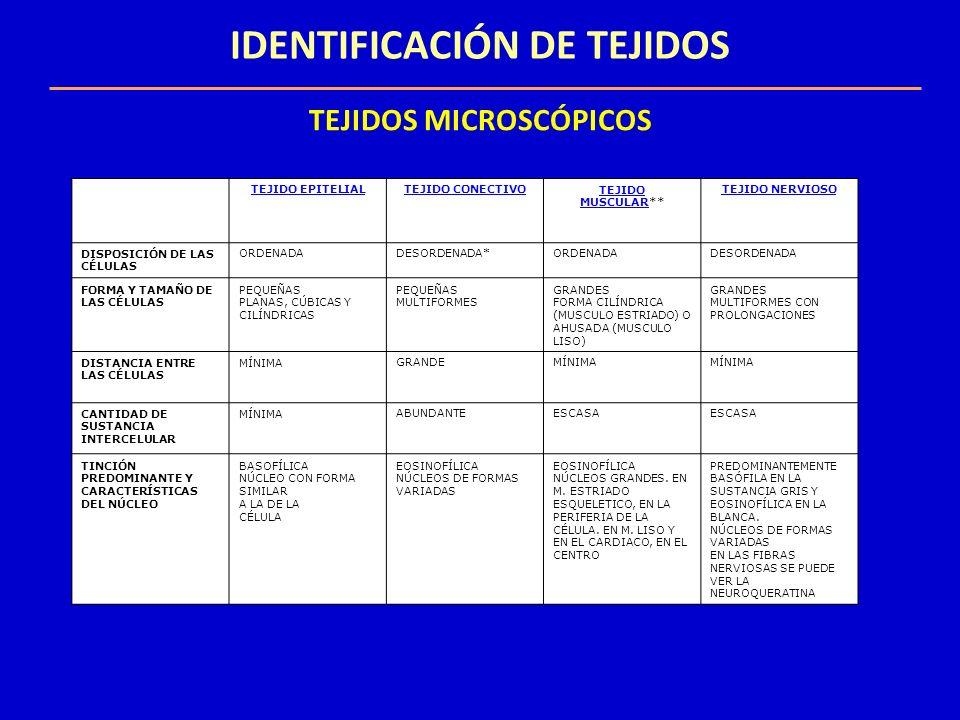 IDENTIFICACIÓN DE TEJIDOS