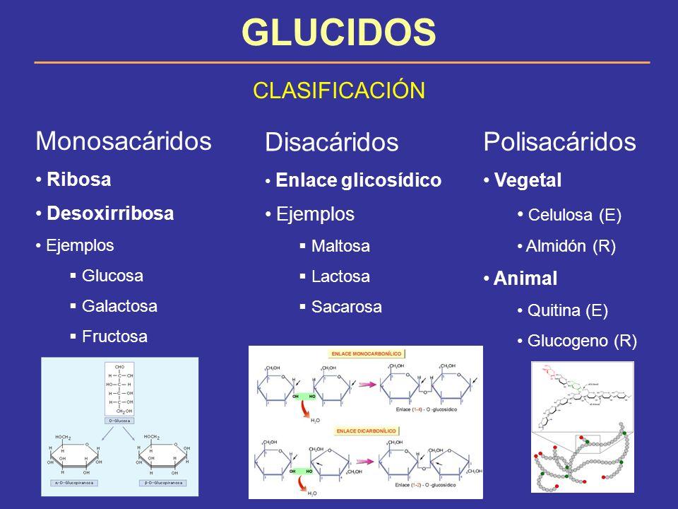 GLUCIDOS Monosacáridos Disacáridos Polisacáridos CLASIFICACIÓN Ribosa