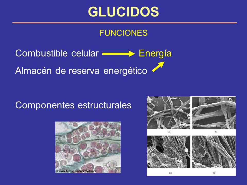 GLUCIDOS Combustible celular Energía Almacén de reserva energético