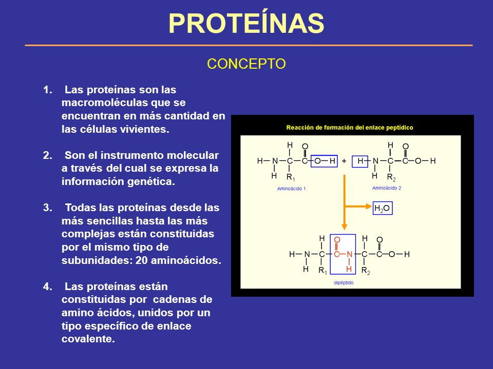PROTEÍNAS CONCEPTO. Las proteínas son las macromoléculas que se encuentran en más cantidad en las células vivientes.