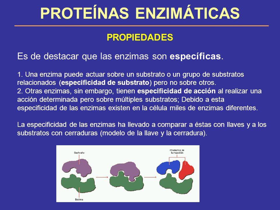 PROTEÍNAS ENZIMÁTICAS