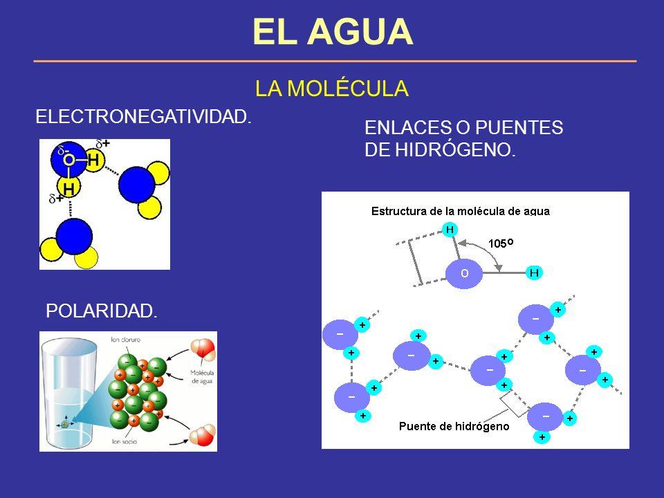EL AGUA LA MOLÉCULA ELECTRONEGATIVIDAD.