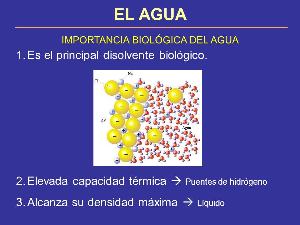 IMPORTANCIA BIOLÓGICA DEL AGUA