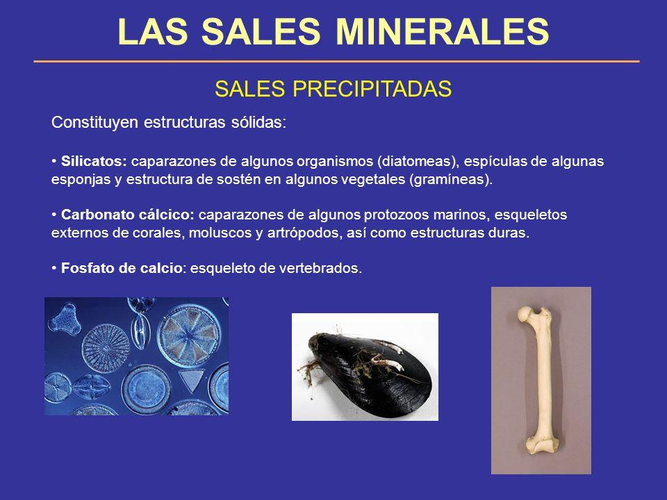 LAS SALES MINERALES SALES PRECIPITADAS