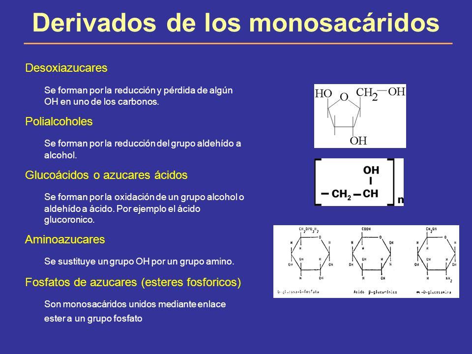 Derivados de los monosacáridos