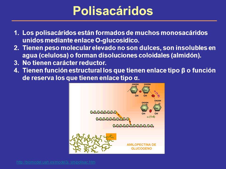 Polisacáridos Los polisacáridos están formados de muchos monosacáridos unidos mediante enlace O-glucosidico.