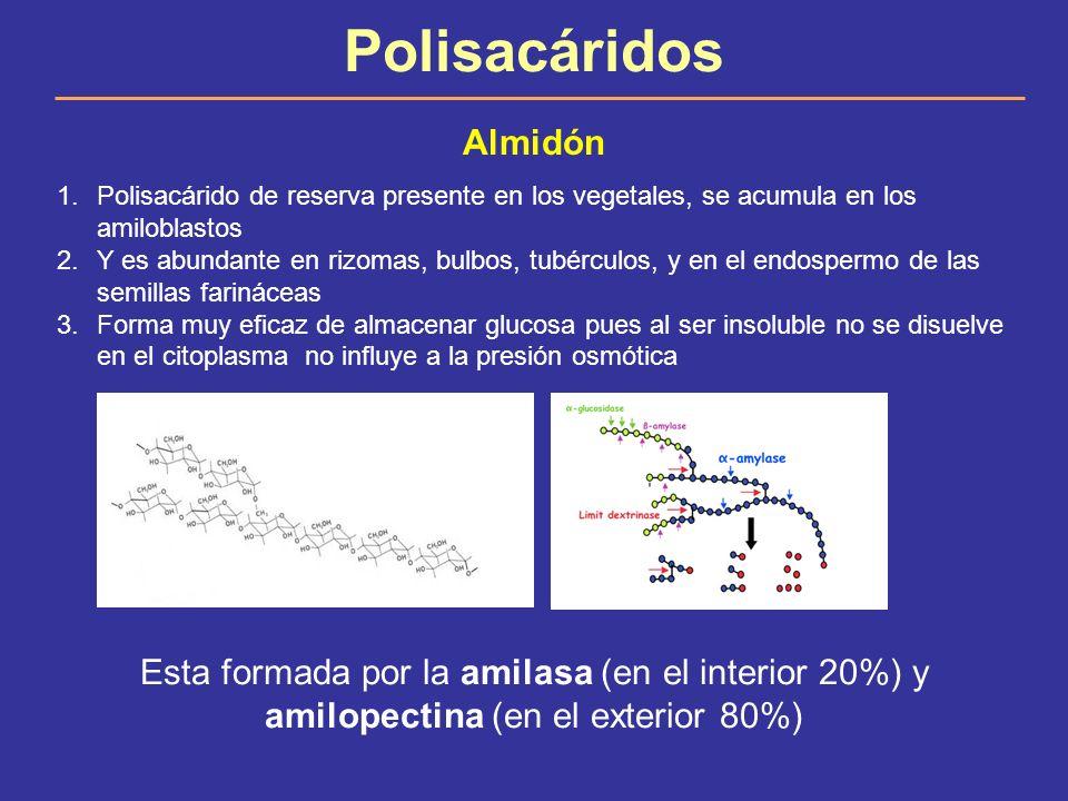 Polisacáridos Almidón