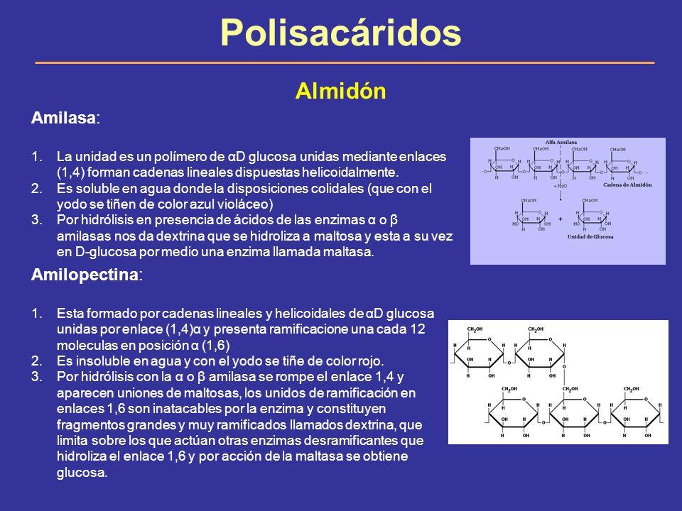 Polisacáridos Almidón Amilasa: Amilopectina: