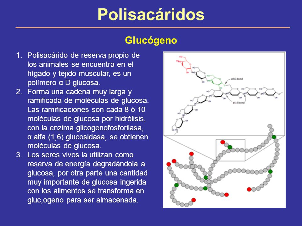 Polisacáridos Glucógeno