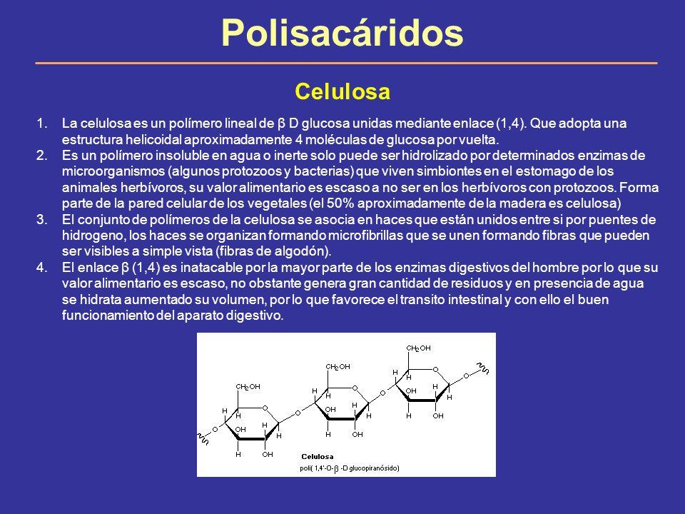 Polisacáridos Celulosa
