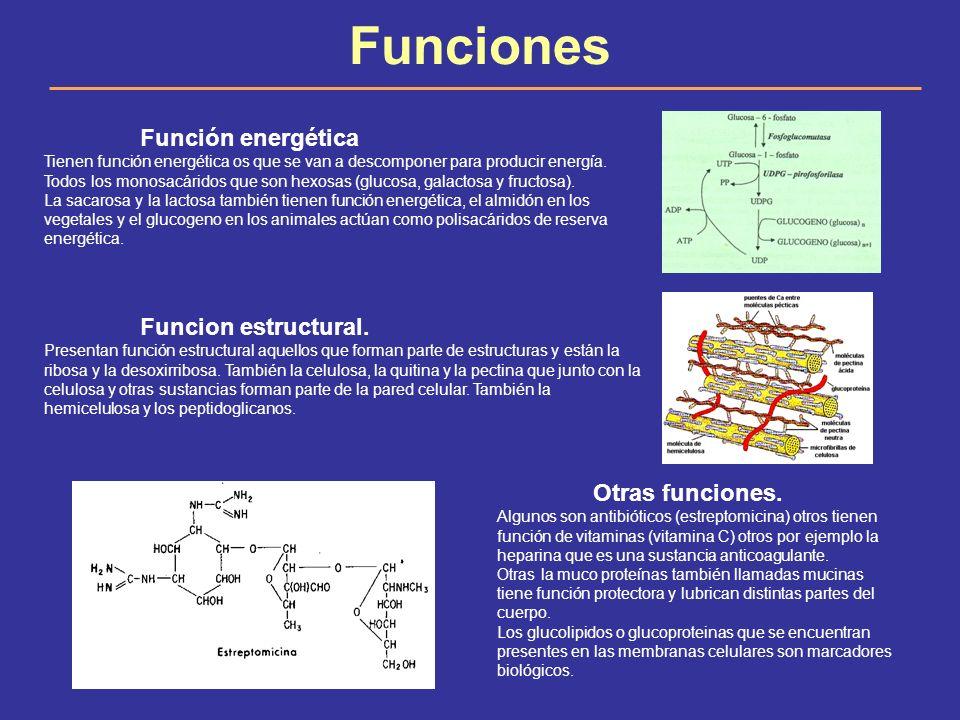 Funciones Función energética Funcion estructural. Otras funciones.