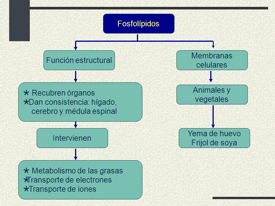 Fosfolípidos Función estructural. Membranas. celulares.  Recubren órganos. Dan consistencia: hígado,