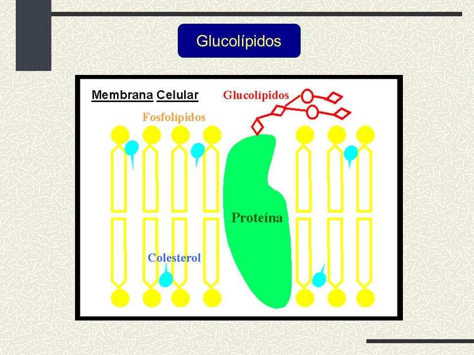 Glucolípidos