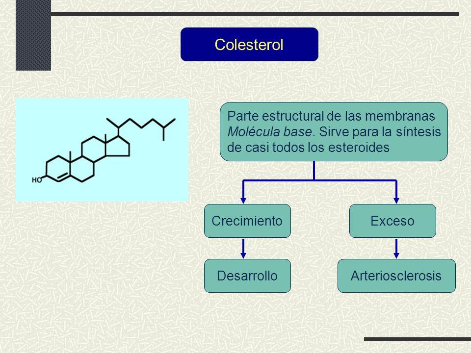 Colesterol Parte estructural de las membranas